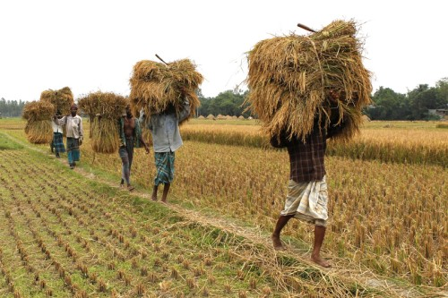 80% of Bangladeshi farmers use mobile phones to gather information on markets and contact buyers. Image by Bayazid Akter, copyright Demotix (01/06/12).